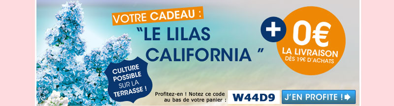 Le lilas California + la livraison offerte dès 19 euros d'achat